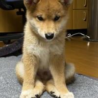 知ってる犬の座り方とちょっと違う……でも可愛いか…