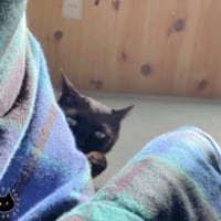 黒猫は見た!?飼い主をこたつの陰から見つめる愛猫