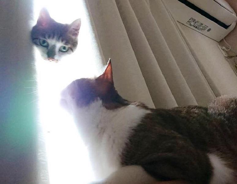 猫神様「力が……欲しいか?」 まるで合成みたいな失敗写真に爆笑