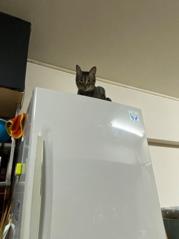 犬とイチャついていると視線を感じる……猫に見られてた!