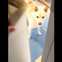 帰宅したのに愛犬が喜ばない……部屋の奥に目をやると「えっ!」