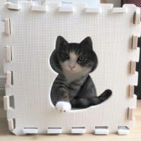 ボクの隠れ家なんだニャ 猫型の箱に「はまった」子猫