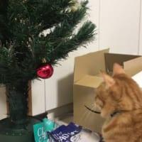 ねこぱーんち! クリスマスツリーを見た猫の反応に…