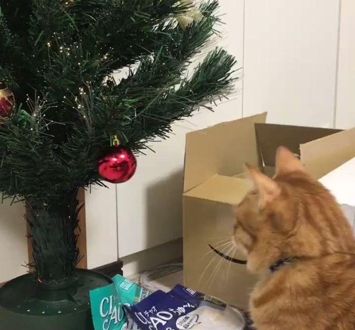 ねこぱーんち! クリスマスツリーを見た猫の反応に多くの共感の声