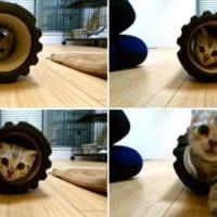 ストレッチ器具も子猫にかかれば玩具に様変わり