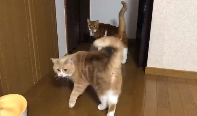 魔法の言葉は「ごはん食べる?」 言われると即反応する愛猫