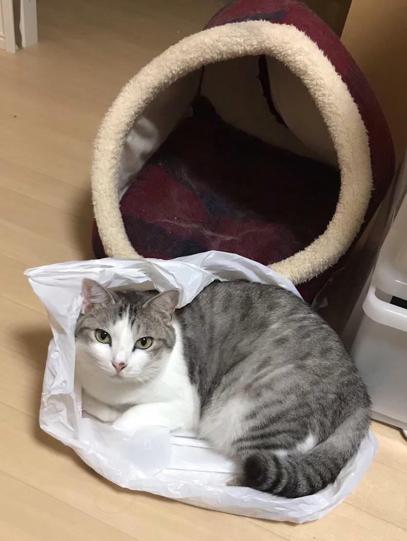 思わず「うしろ〜!」と言いたくなる ビニール袋に入って満足げな猫