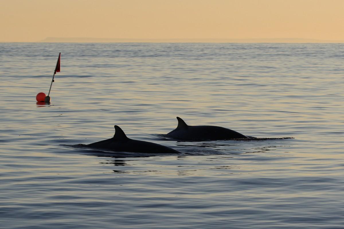 アメリカ海軍支援の研究チーム 新種?のクジラを発見