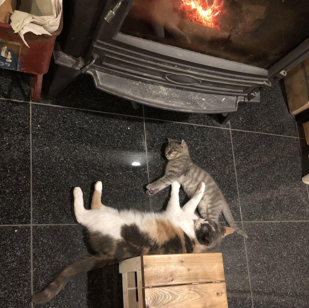 あったかいんニャから~ ストーブ前でくつろぐ猫