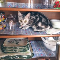 食器を入れ替えてたら 猫は飼い主の隙を決して見逃さない