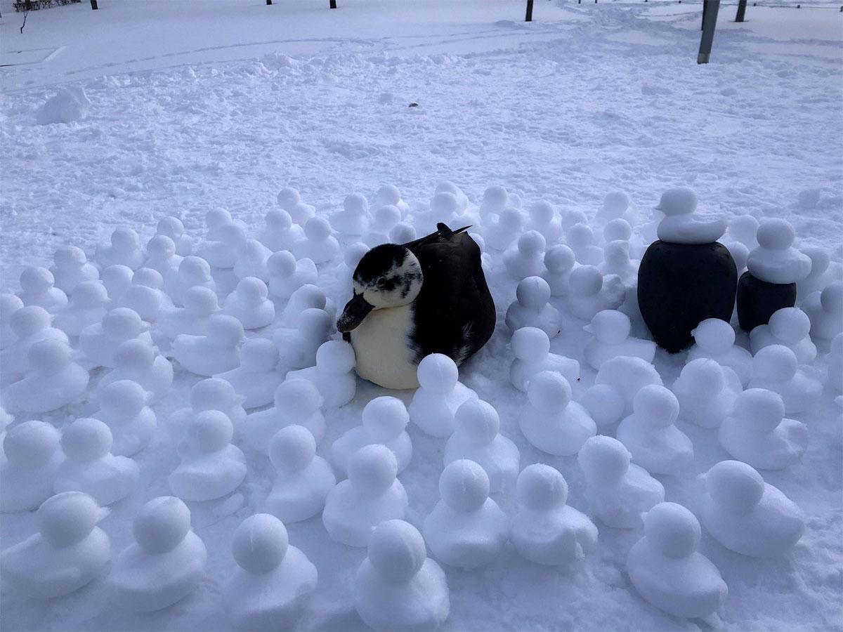 「アヒル作りは楽しいからね」 思い出の地で作った「アヒル雪だるま」