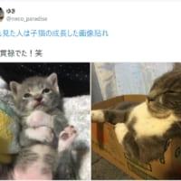 子猫の頃の面影はどこ!?貫禄たっぷりに成長した愛猫