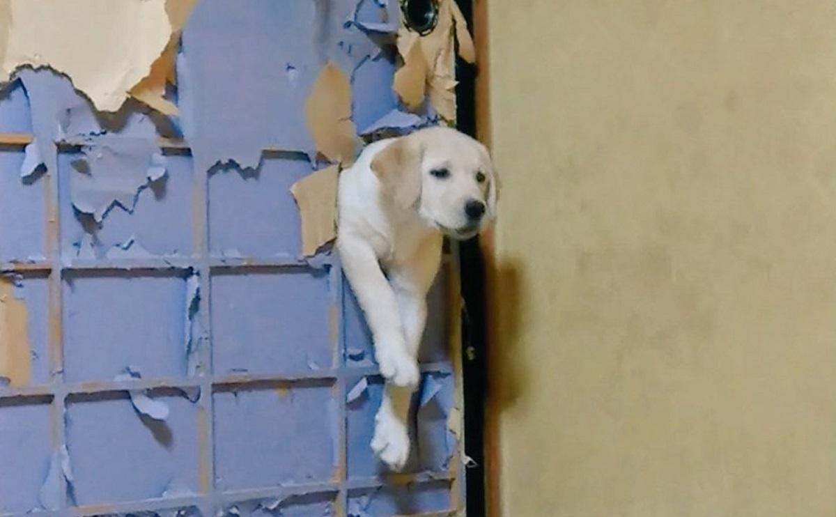 DIYしたワン! 犬がせっせとペットドア作成→ふすまを突き破る姿に大爆笑
