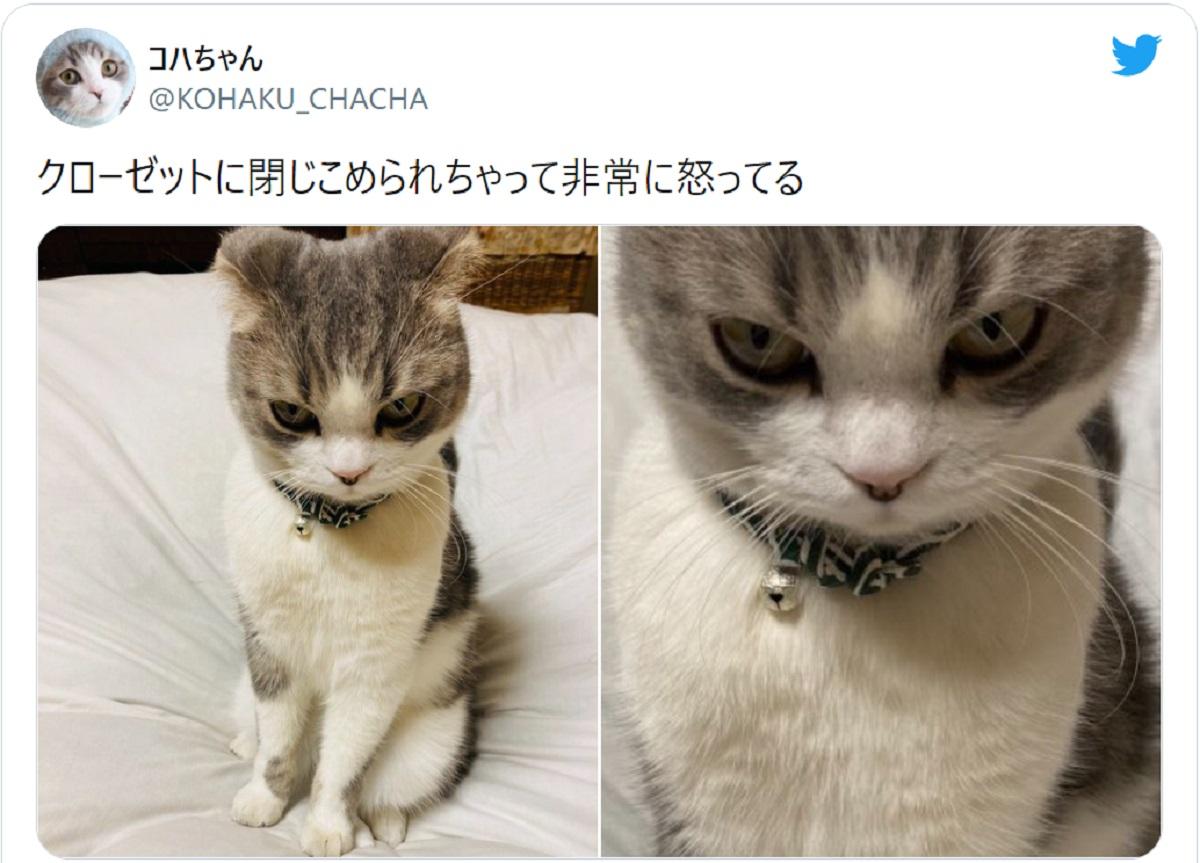 クローゼットに閉じ込められ愛猫激怒 早く詫びちゅ~るを!