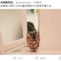 どうしてそうなった?お風呂のドアに挟まれたまま寝てしまった猫