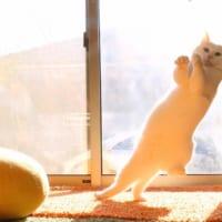 スタンド使い?ジョジョ立ちしている猫を発見