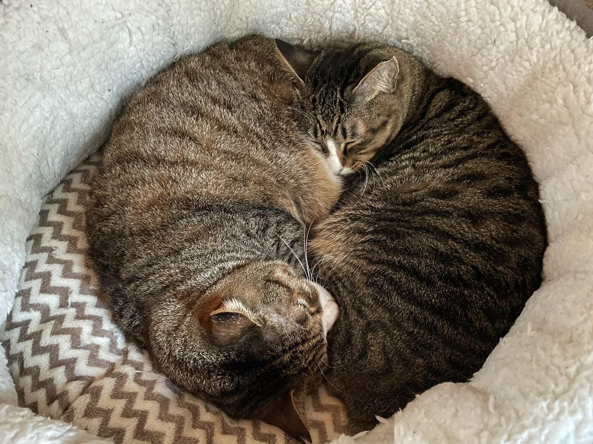太極図?仲良く丸くなって眠る2匹の猫