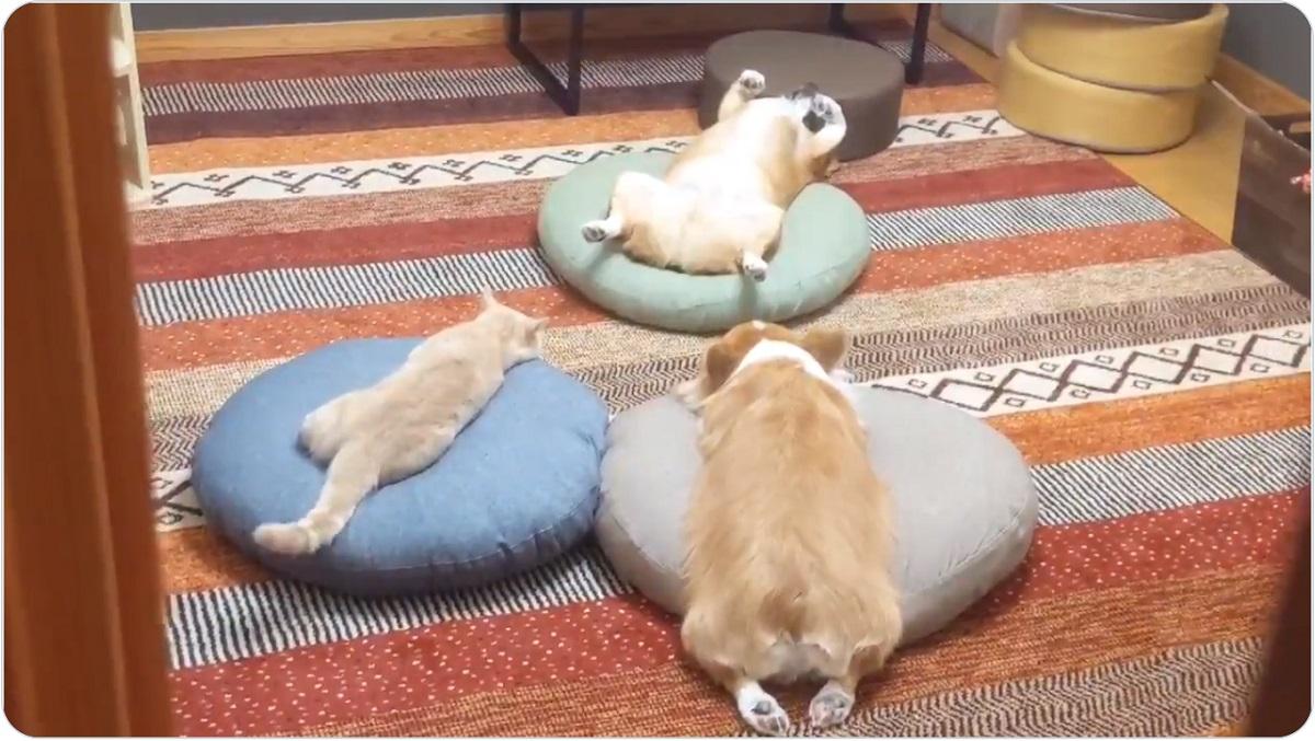 怪しい儀式?愛犬と愛猫の姿に飼い主そっ閉じ……