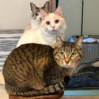 ニャ―ニャ―トレイン 猫界のEXILE「ネコザイル」誕生