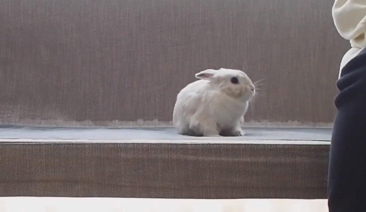 なでるのをやめると「……え?」となるウサギが可愛い