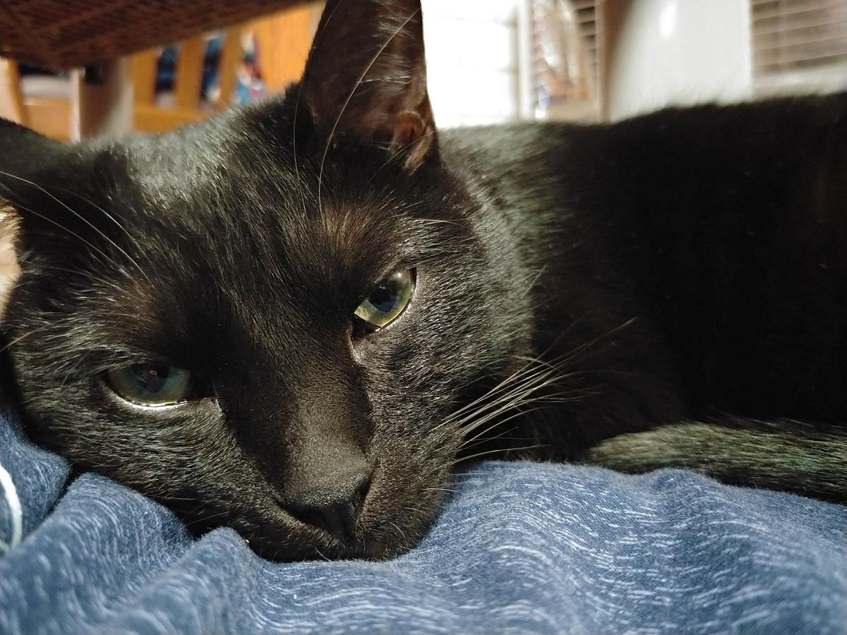 黒猫が1歳の子供に見せた大人の対応 「優しくてえらい」と称賛