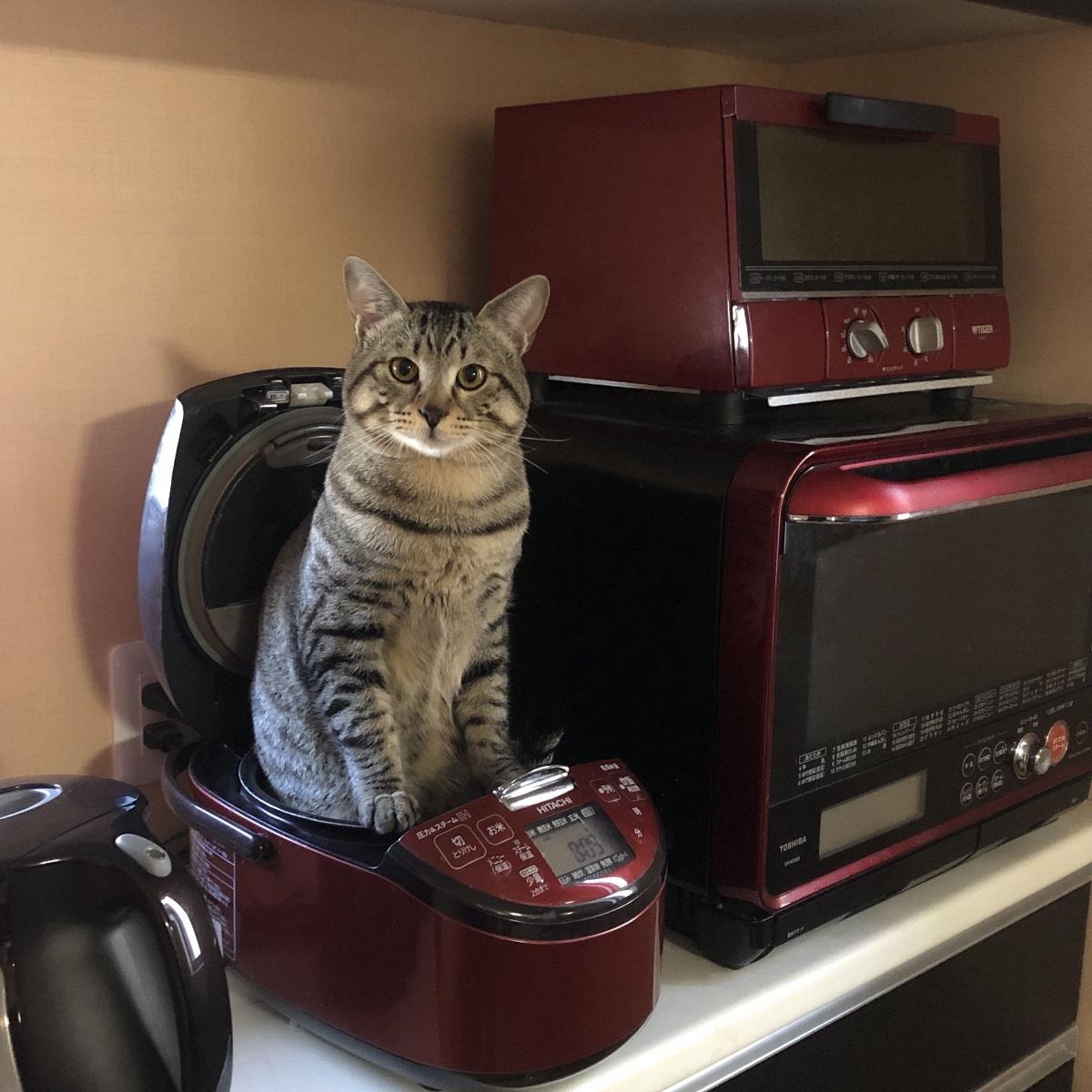 これが本当の猫まんま?炊飯器から猫が生えているぞ!