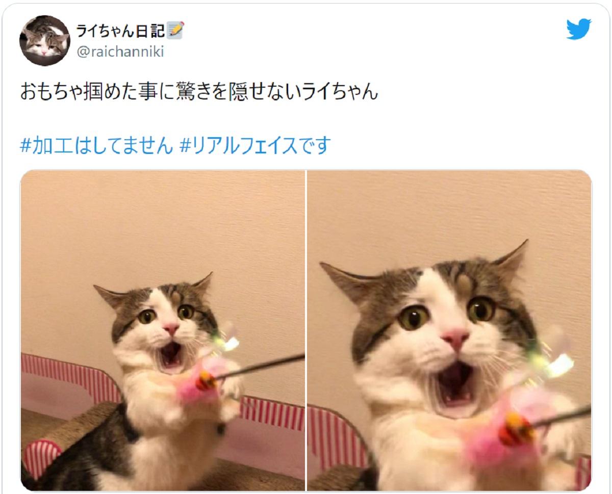 表情のクセ!おもちゃを掴めたことに驚く猫の顔に爆笑