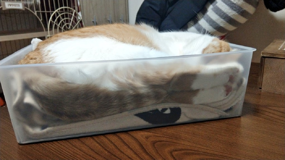 仕事が納まらないご主人様をよそにピッタリ納まった愛猫