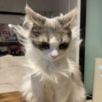 ゴゴゴ…… オーラ力あふれる猫様が現れる