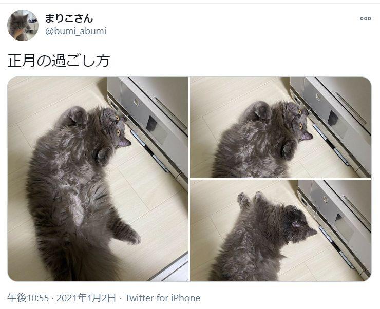 猫流「正しい正月の過ごし方」がTwitter上で披露される