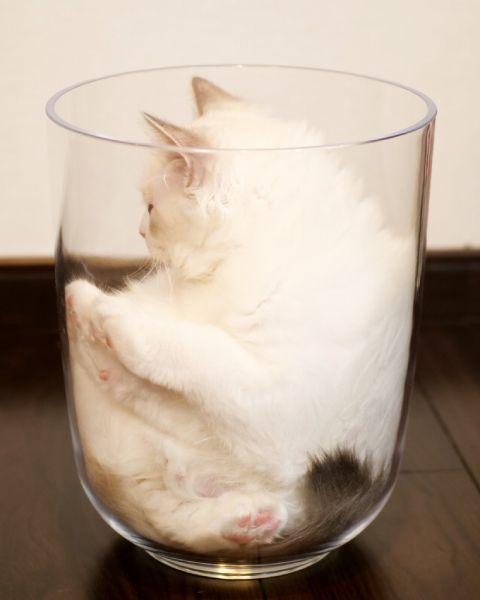 「ハマった」結果、最終的にメルくんは液体になってしまった模様。
