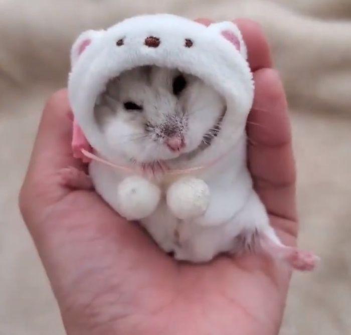 寒くなってきたので厚着をして食事をするハムスター