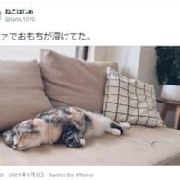 ソファの上で溶けていた「おもち猫」