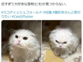 まさに「灯台下暗し」の状況で物を探す子猫ちゃんがTwitterで話題。