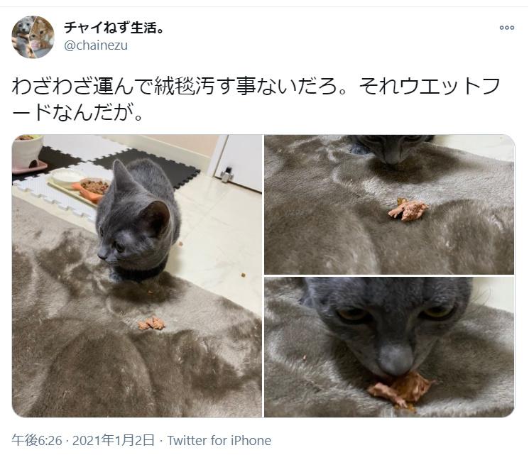「それウェットフードなんだが」 絨毯の上に移動して食事をする猫