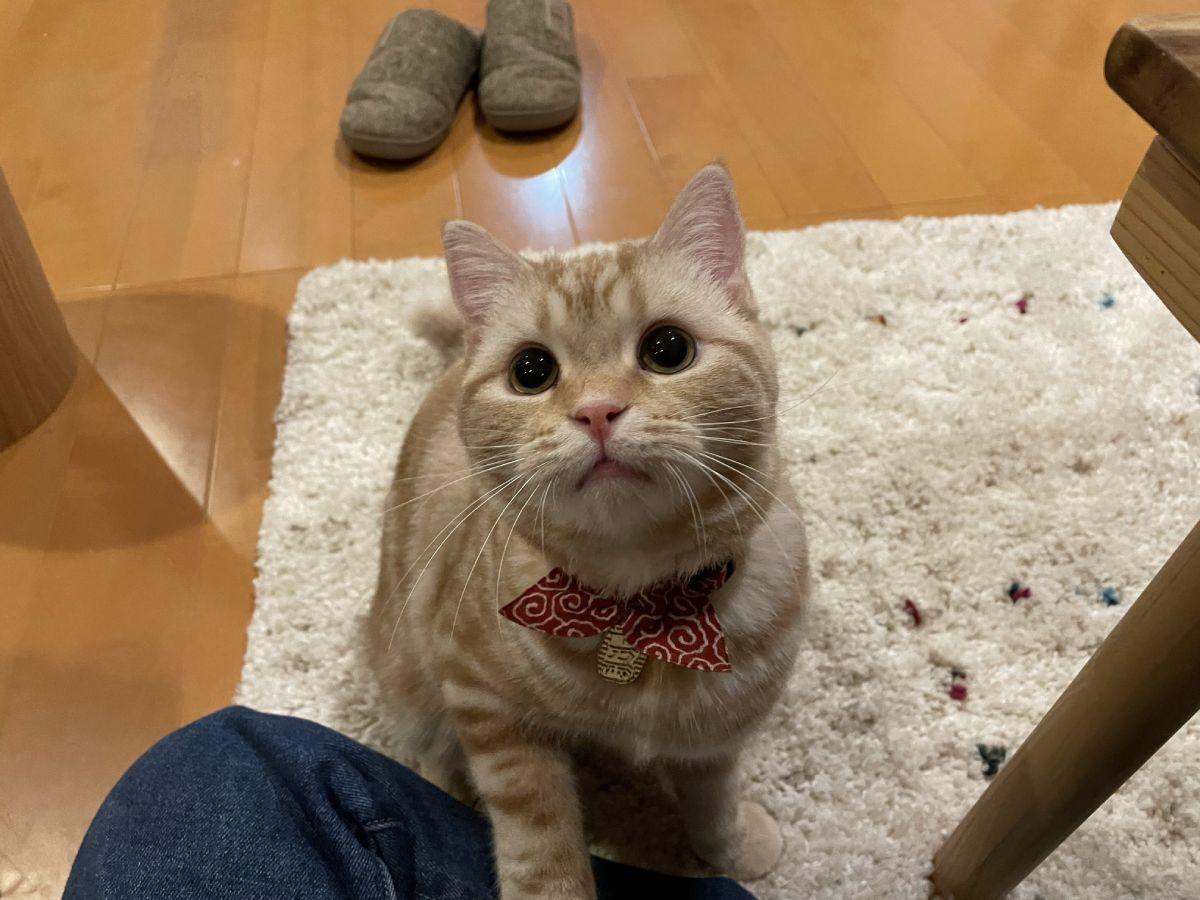 こんな顔されると貢ぎぐせが…目だけで飼い主に訴える猫
