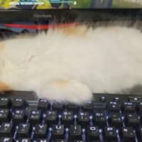 飼い主に「普通の体勢で寝てもらっていいですか?」とツッコまれる子猫