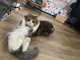 飼い主に「ツボる」と評された猫ちゃんの表情がTwitterで話題。