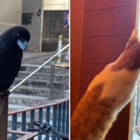 待ち人来ニャイ…… けど別の来訪者?に興味津々の子猫