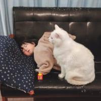 寝ている子供を守る育ニャン 愛溢れる光景に心温まる