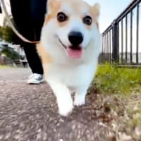 鼻歌が聴こえてきそう?散歩中の愛犬の表情を撮影してみた