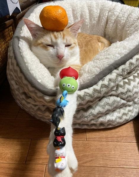 何をされてもされるがまま 飼い主をトコトン無視する猫