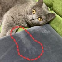 「また心霊現象か……?」 かわいい愛猫の写真を撮ってみたら
