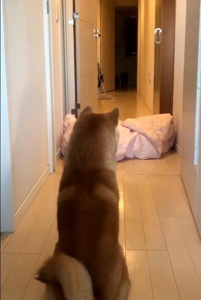 目の前にいた飼い主さんの夫が突然消える