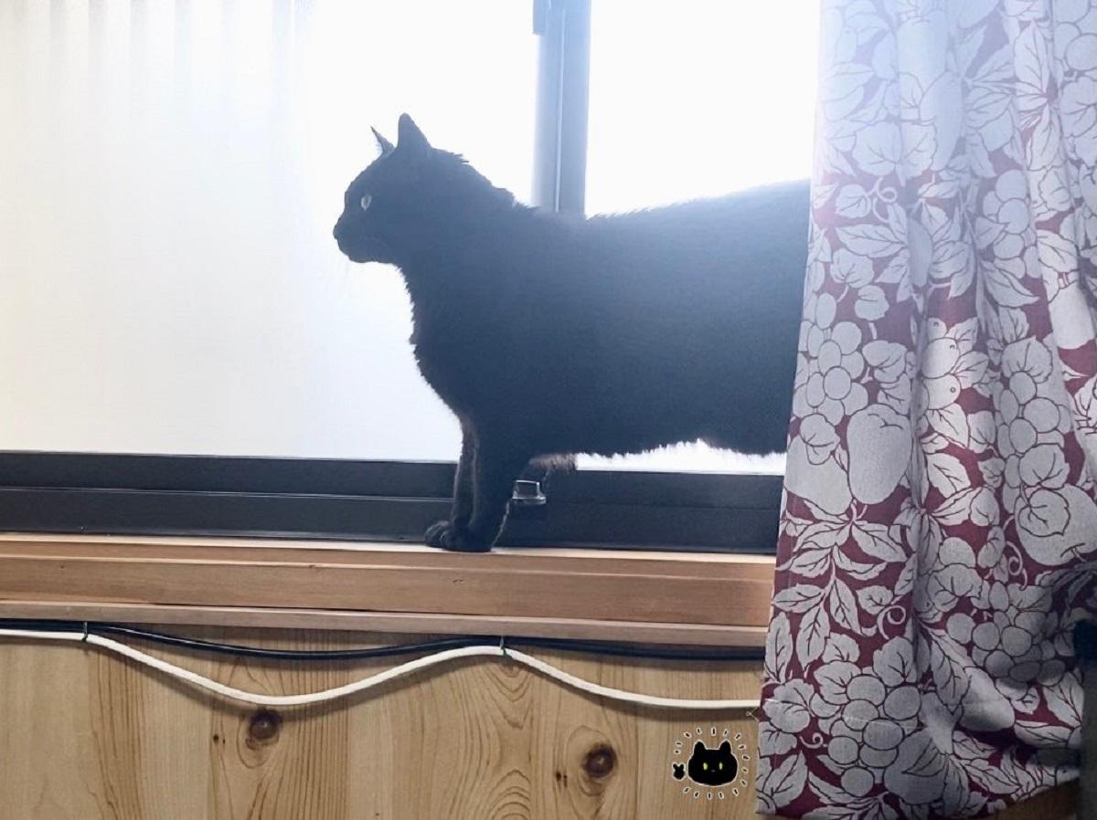 後光を背負っておごそかに登場 シシ神?と話題の神々しい猫