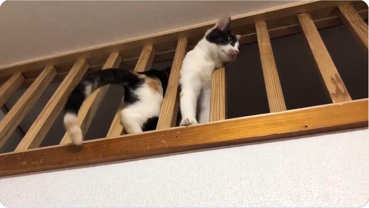 画像提供:黒猫と三毛猫のミケネコタ&ヲネコママさん(@kuronekonekota)