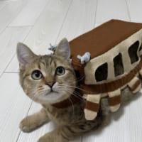 小さなリアル猫バス! 可愛すぎて「ずっと乗車して…