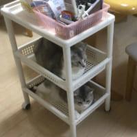 サイドワゴンが猫の2段ベッドに…… 猫「何か問題…
