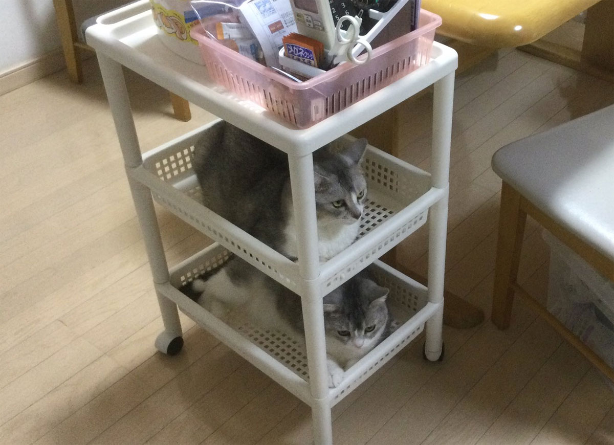 サイドワゴンが猫の2段ベッドに…… 猫「何か問題でも?」