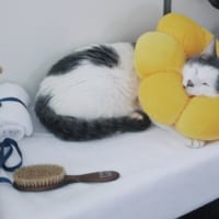 スヤァと眠るポン・デ・ニャイオン!? いい具合の…